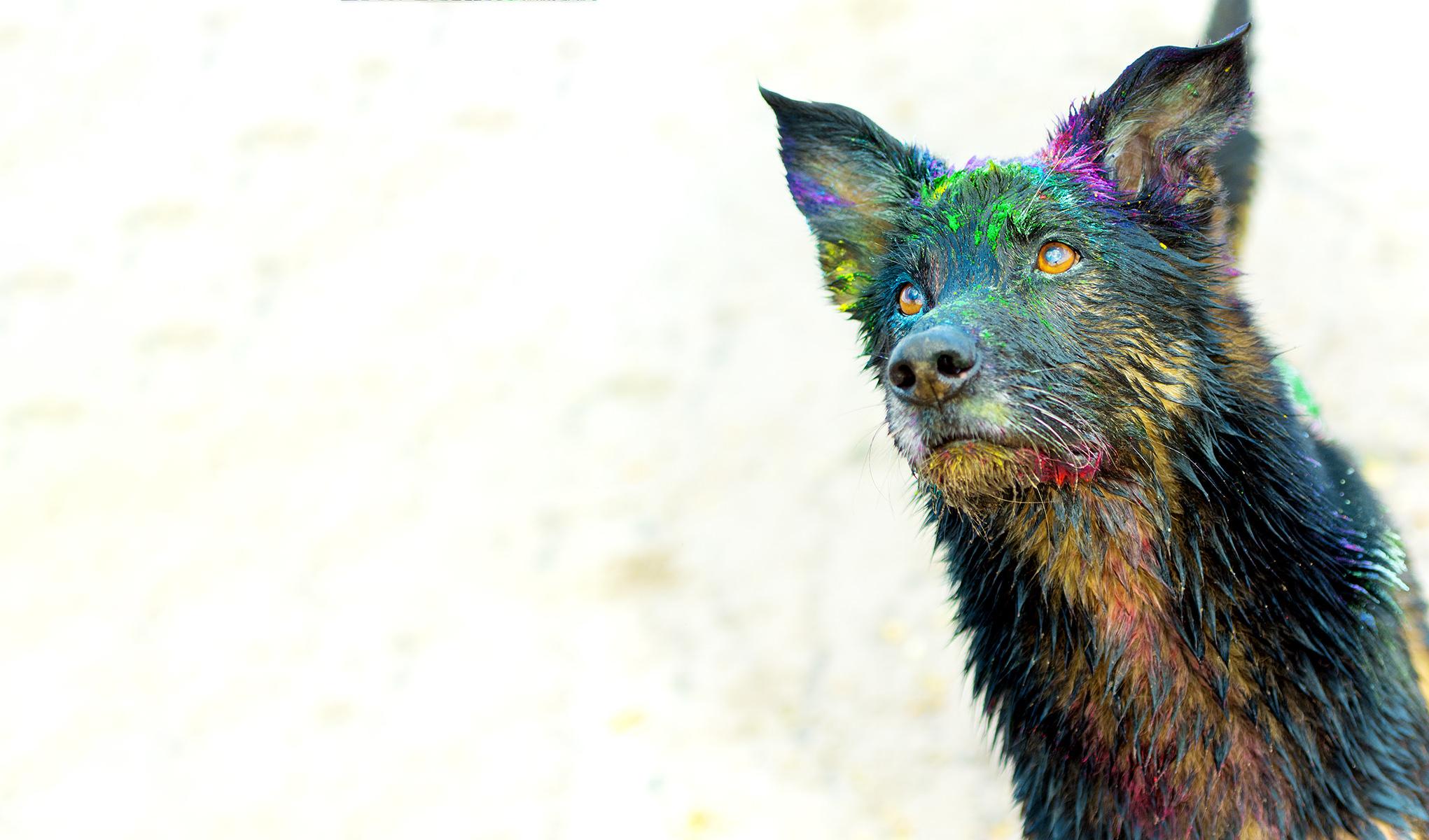 Regenbogen Fotografen